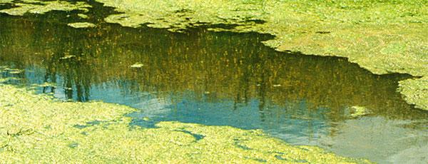 Obstrução da rega por algas