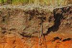 humidade em solos